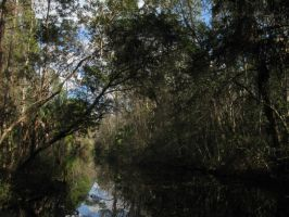 378 Homosassa State Park by crazygardener