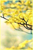 Yellow Tree by Memmarte