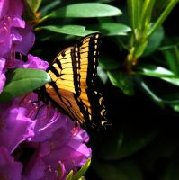I chased this butterfly today by prettyflour