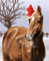 Holiday by equusferus