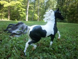 Black Tie Breyer by MudstarMord-Sith