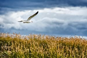Flight of a Seagul by jViks
