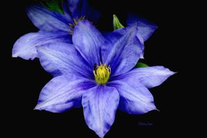 Deepest Blue by Deb-e-ann
