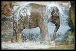 Asian Elephant by Prince-Photography