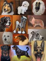 Dog pastel portraits by Magdalena888