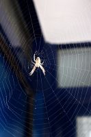 SPIDER AND WEB AUGUST 2015  59 Fotor by LUSHMONTANAS