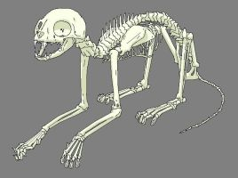 Cat Skeleton by Vaneetra