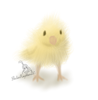 Baby chick by SailorRaybloomDZ