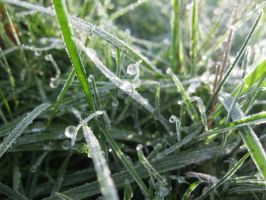 Grass frosted over by TMNT224