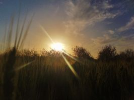 Sun setting over a wheat field by EvilOpal