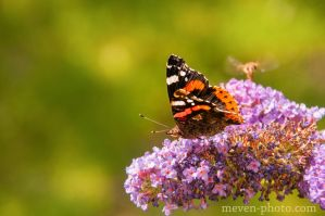 Butterfly by brijome