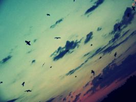 Ravens in the sunrise by MorgueCaroObitorio