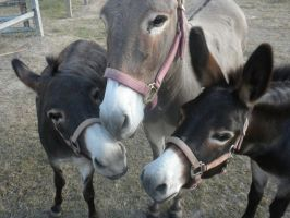Best Burro Friends Forever by mirielthepiratelover