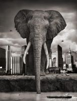 Giant Elephant by jimmytwoshoes