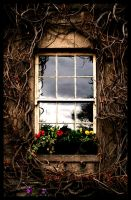 Vine Window by TheShelledOne