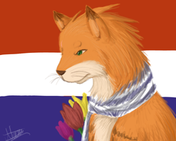 Netherlands Cat by Midoromi
