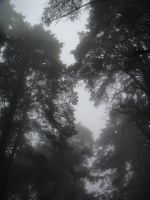 Mist masked Forest by Scifiglitch
