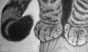Kitty Paws by crystalrockart