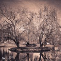 somewhere by ildiko-neer