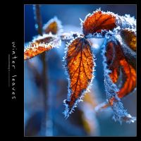 Winter Leaves by Stridsberg