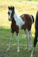 Foal stock 73 by Bundy-Stock