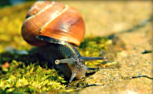 Snails Pace by JunsuiFox