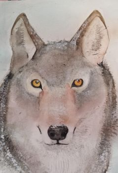 Wolf watercolor by Lunar-White-Wolf