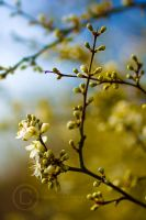 Morning Gold by eyedesign