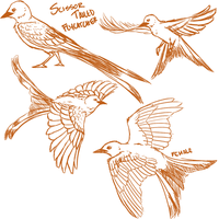 Scissor Tailed Flycatchers (Tumblr Sketches) by KennonInk