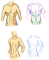 Male Torso Anatomy 1 by Vietii