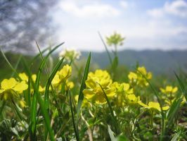 Forest meadow spring 2 by love1008