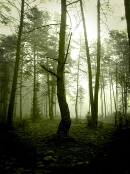 forest... by BrokenLens