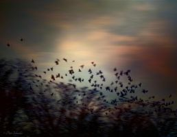 Evening fluttered. by Phototubby