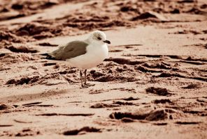 Seagull on the Sand by MariaWillhelm