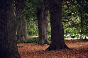 Trees of Old Westbury Gardens by WickedOwl514