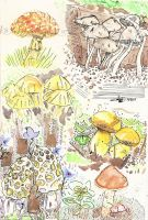 Mushrooms and Fungi Study pt. One by izenhime