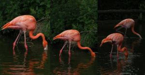 Flamingoes 3 by Tasastock