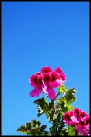 Pink and Green 1 by Morillas