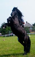 Removed tack friesian by suuslovertje
