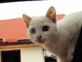 whiskers_2 by puszika