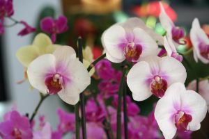 orchids in floriade 3 by ingeline-art
