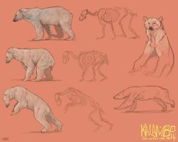 Polar bear study by kalambo