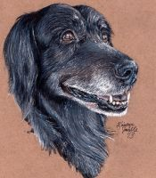 Commission - Ebbie the Flat-Coated Retriever by KristynJanelle