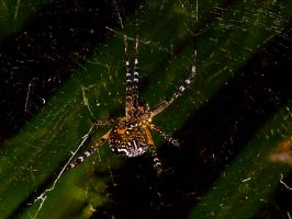incybinsy_spider2 by jasonclaude