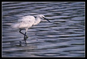 Stalk the shallows by MessiahKhan