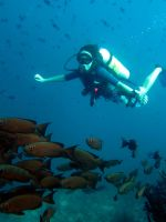 Scuba Diving in the Maldives by AshuraCastle