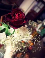 Beautiful Rose by Einas-A
