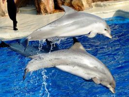 Dolphins by sixsecondsless