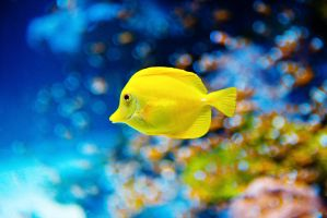 yellow fish by theprodiqy