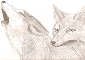 Drawing Wolves by cdla